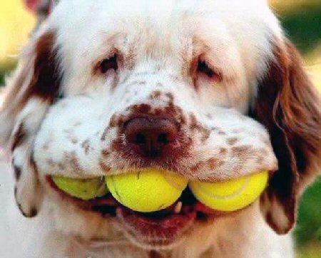 3_balls_dog